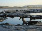 Tara Galilor: Furtunile au dezgropat o padure veche de 6.000 de ani